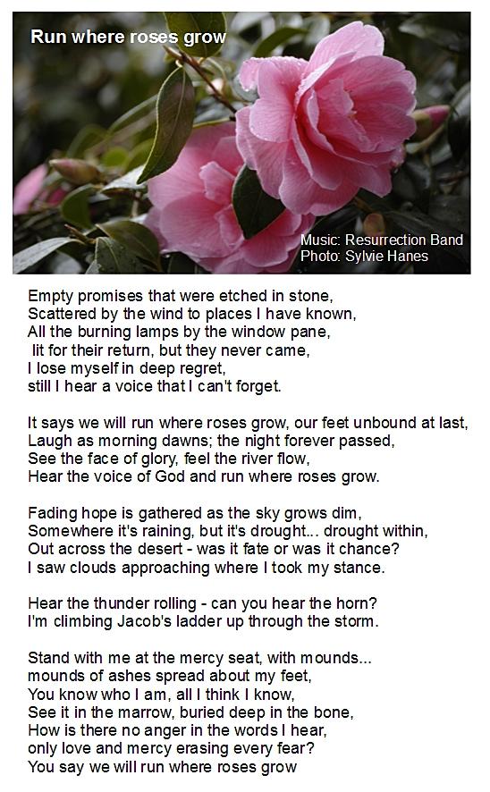 run roses grow