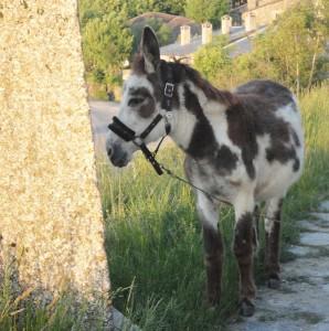 Nestor the donkey