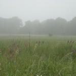 mist-s
