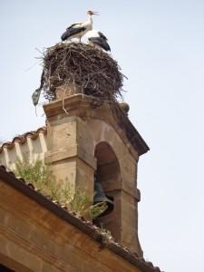 Stork bra